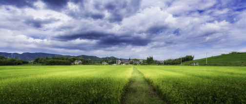 土地拍卖的流程是怎样的